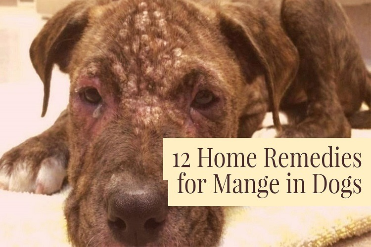 Dog Mange – Your Dog's Worst Enemy